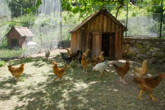 Кокошарник - етно куќа Тео-Дор